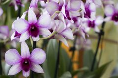 Mooie orchidee in de tuin stock foto