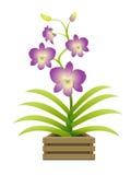 Mooie orchidee in een pot Stock Afbeelding