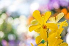 Mooie orchidee geel in tuin Stock Afbeeldingen