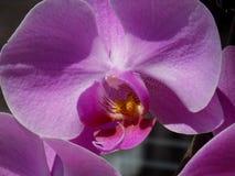 Mooie Orchidee in Macrodetails Royalty-vrije Stock Afbeeldingen