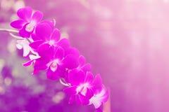 Mooie orchideeachtergrond Stock Afbeeldingen