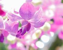 Mooie Orchideebloem in tuin Stock Afbeelding