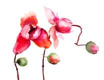 Mooie orchideebloemen Royalty-vrije Stock Foto's