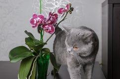 Mooie orchideephalaenopsis Stock Fotografie