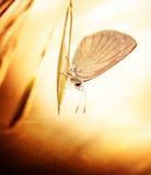 De foto van Grunge van vlinder Stock Foto's