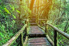 Mooie oude houten brug in regenwoud bij het Nationale Park van Doi Inthanon MAI van Chiang thailand stock fotografie