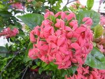 Mooie overladen die bloemen in geur worden gevangen stock foto