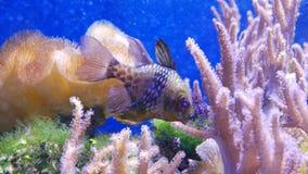 Mooie overzeese bloem in onderwaterwereld met koralen en vissen stock videobeelden