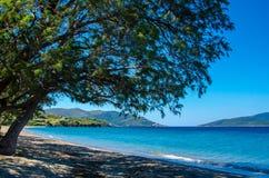Mooie overzeese lagune met boom Stock Afbeelding