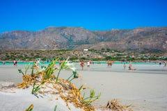 Mooie overzeese lelies, die direct op het zand groeien Strand Elafonisi Mening aan Ida Mountains van de zuidenkant van Kreta stock foto
