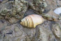 Mooie overzeese shell op strand stock fotografie