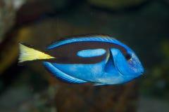 Mooie overzeese vissen Royalty-vrije Stock Afbeeldingen