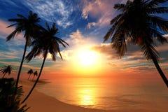 Mooie overzeese zonsondergang op het strand met palmen Stock Foto