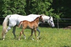 Mooie Paarden Stock Foto