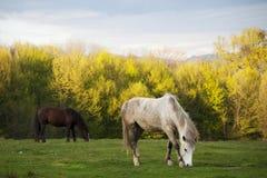 Mooie paarden in een park Stock Afbeelding