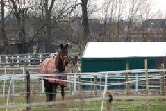 Mooie paarden, hurdler stock afbeeldingen