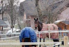 Mooie paarden, hurdler stock foto's
