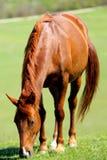 Mooie paarden op groen bergweiland Stock Afbeeldingen