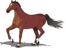 Mooie paardtekening, kleur Royalty-vrije Stock Afbeelding