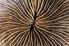 Mooie Paddestoel Coral Abstract Royalty-vrije Stock Fotografie