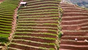Mooie padievelden met hut en landbouwers stock videobeelden