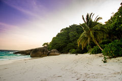 Mooie palm op het onaangeroerde strand Stock Afbeeldingen
