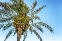 Mooie palm tegen een duidelijke blauwe hemel, close-up royalty-vrije stock fotografie