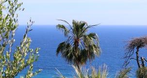 Mooie palm tegen het blauwe overzees en de hemel stock videobeelden