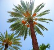 Mooie Palmen Stock Afbeelding
