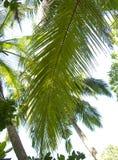 Mooie palmen bij het strand Stock Foto