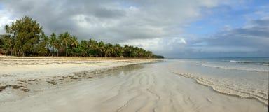 Mooie palmen bij het strand Royalty-vrije Stock Afbeeldingen