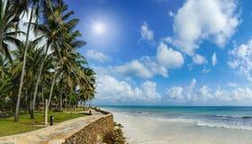 Mooie palmen bij het strand Royalty-vrije Stock Afbeelding