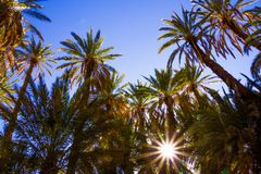 Mooie palmen in oase dicht bij Tinghir, Marokko, Afrika stock afbeelding