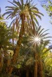 Mooie palmen in oase dicht bij Tinghir, Marokko, Afrika stock foto's