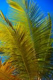 Mooie palmen op hemelachtergrond Royalty-vrije Stock Foto's
