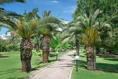 Mooie palmsteeg Royalty-vrije Stock Afbeeldingen