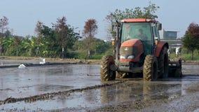 Mooie panoramisch van tractor die een padieveld met het witte reigers vliegen ploegen stock videobeelden