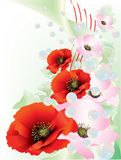 Mooie Papavers met drijvende bel Royalty-vrije Stock Afbeelding