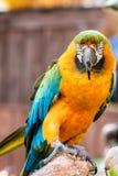 Mooie papegaai Stock Foto