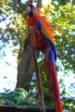 Mooie papegaai Stock Fotografie
