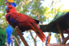 Mooie papegaai Royalty-vrije Stock Foto's