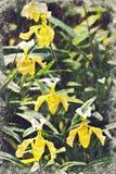 mooie paphiopedilum exotische bloemen in Chiangmai, Thailand D royalty-vrije stock afbeelding