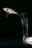 Mooie Pasen bloeit lilly Stock Afbeeldingen