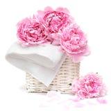 Mooie pastelkleur roze bloem stock foto's