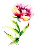 Mooie pioenbloem Royalty-vrije Stock Afbeelding
