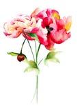 Mooie pioenbloemen Royalty-vrije Stock Afbeeldingen