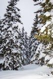 Mooie plaats in de Alpen stock foto