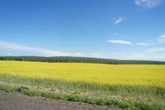 Mooie plaatsen van de bol, Baikal stock fotografie