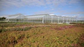 Mooie plastic die serres en groenten met veggie tuin worden geplant stock footage
