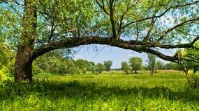 Mooie plattelandsscène stock afbeelding